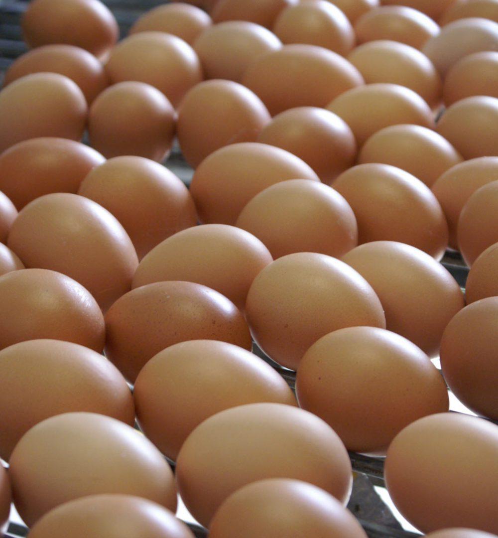 Eureden branche œuf