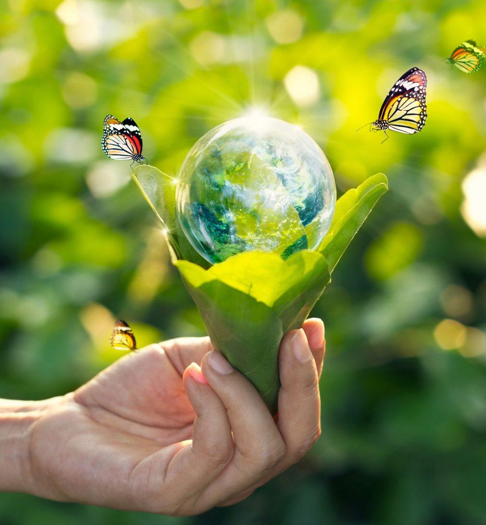 Nos solutions respectueuses de la planète