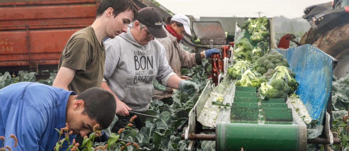 Eureden productions végétales - légumes frais