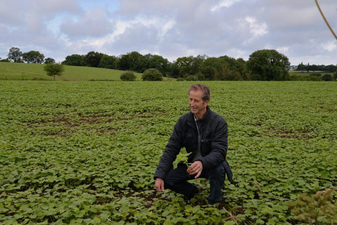 Eureden : Le blé noir à la reconquête des terres